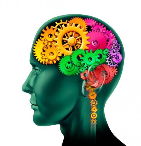 gymnastique,cerveau,exercices,forme
