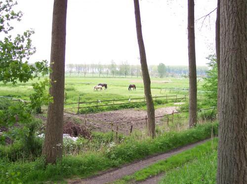 Oostkerke (82).JPG