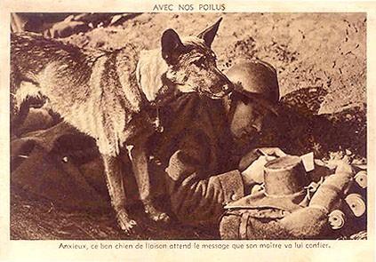 histoire,animaux