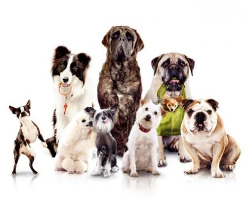 animaux,dangerosité,chien,catégories,personnes,risque