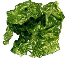 alimentation,algues,laitue,mer,nori,salicorne