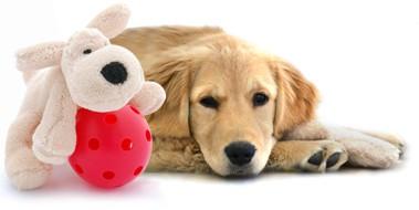 animaux,conseils,accueil,chien,adulte