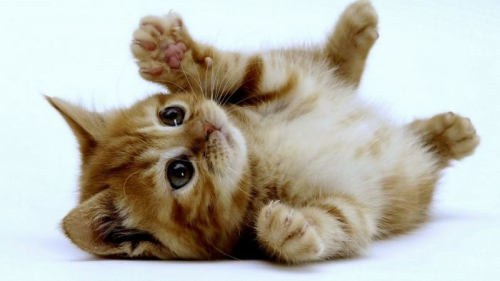 animaux,chat,origines,choisir,accueil,maison