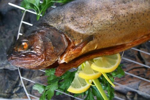cuisine,poissons,grillades,entiers,darnes