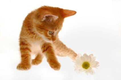 animaux,chat,propreté,nettoyer,composants,chimiques