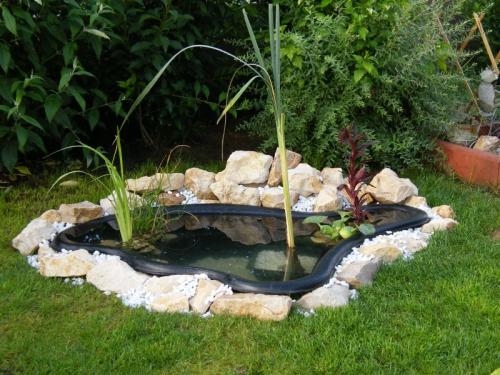 jardin,étang,formes,dimensions,eau