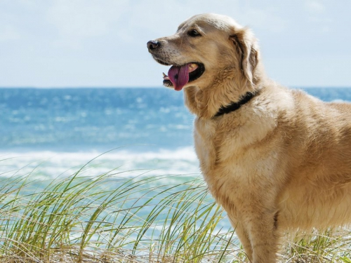 animaux,vacances,chien,chat,accompagner