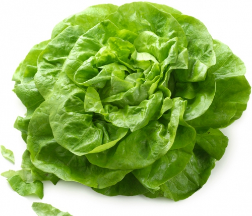 alimentation,salade,verte,feuilles,laitues