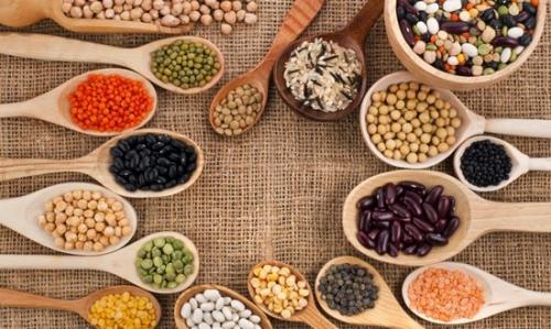 alimentation, protéines