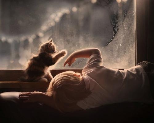 animaux,enfants,bébé,cohabitation