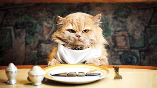 animaux,attention,santé,domestiques,goût