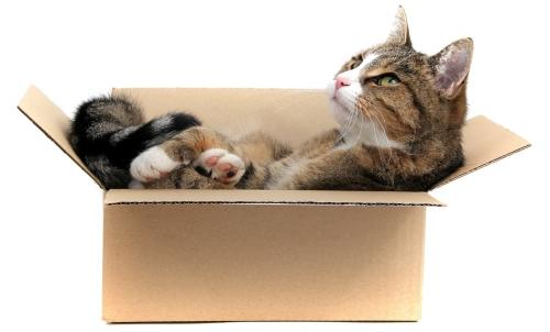 animaux,déménager,chat,ancien,nouveau