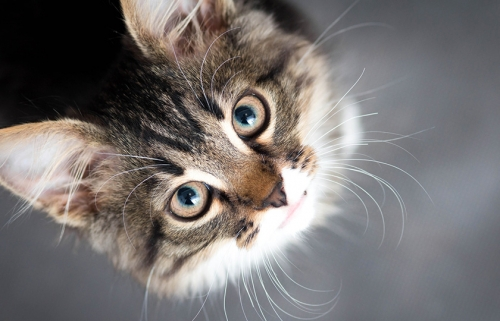 animaux,avoir,chat,annuler,objections,faire,pendant,vacances